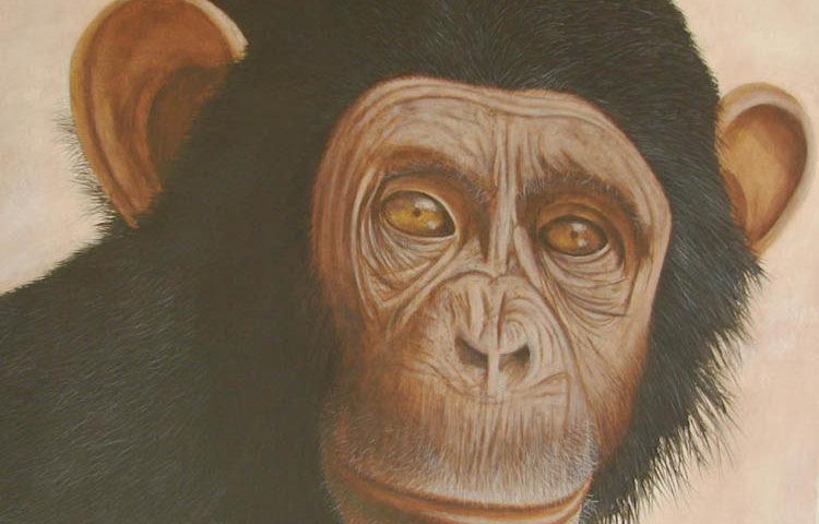 Chimpanzé - 60x60