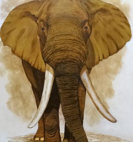 Elephant 81x54