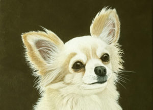 Mélisse Chihuahua 30x30