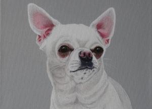 Mia Chihuahua 30x30