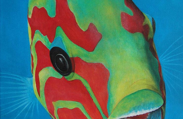 Poisson girelle paon - 30x30