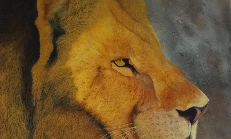 Lion d'Afrique - 60x60