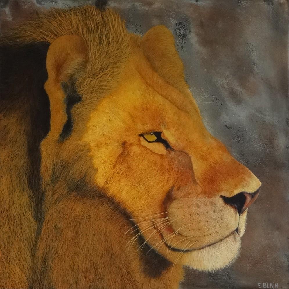 Lion d'Afrique -60x60
