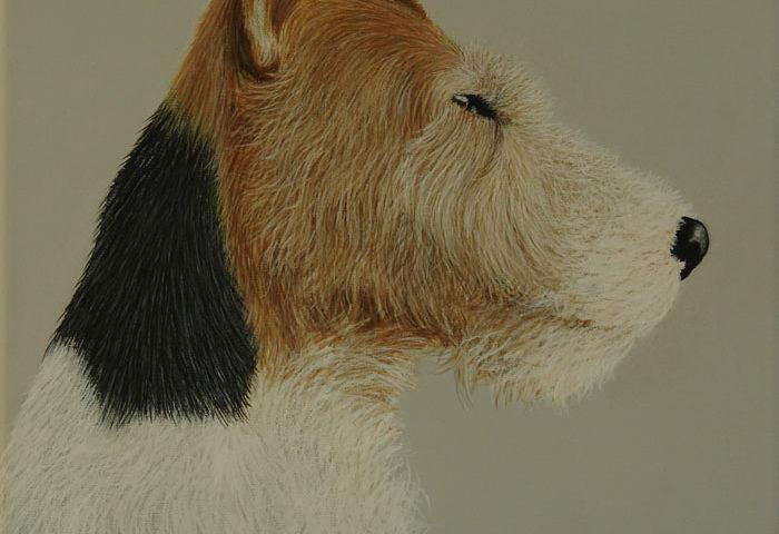 Fox Terrier Ohna 30x30