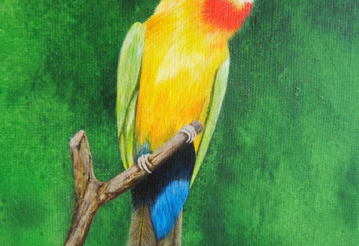 Oiseau Guêpier 30x20