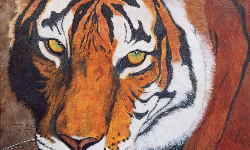 Sheerkan Le Tigre - 80x80 -acrylique